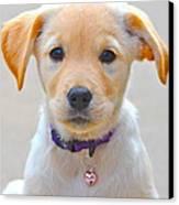 Pupp Canvas Print