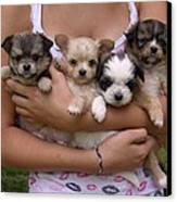 Puppies In Maria's Arms Canvas Print
