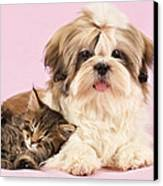 Puppy And Kitten Canvas Print by Greg Cuddiford