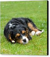 Puppy Asleep With Garden Daisy Canvas Print