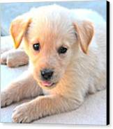 Puppy Canvas Print by Paul Sotelo