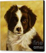 Puppy Portrait Canvas Print by John Silver