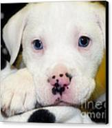 Puppy Pose With 4 Spots On Nose Canvas Print