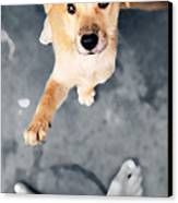 Puppy Saluting Canvas Print by William Voon
