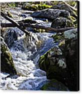 Pure Mountain Stream Canvas Print by Bill Cannon