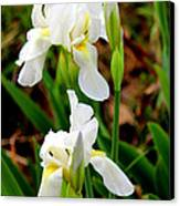 Purity In Pairs Canvas Print