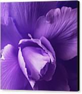 Purple Begonia Flower Canvas Print by Jennie Marie Schell