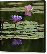 Purple Blossoms Floating Canvas Print by Patricia Twardzik