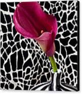 Purple Calla Lily Canvas Print