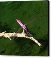 Purple Dragonfly Canvas Print by Ella Char