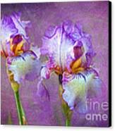 Purple Iris Canvas Print by Lena Auxier