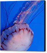 Purple Striped Jelly Fish 5d24930 Canvas Print by Wingsdomain Art and Photography