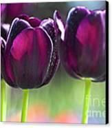 Purple Tulips Canvas Print by Heiko Koehrer-Wagner