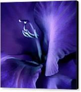 Purple Velvet Gladiolus Flower Canvas Print by Jennie Marie Schell