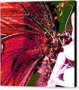 Purple Wings Two Canvas Print by Walter Klockers