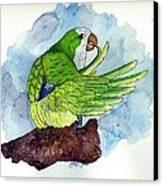 Quaker Parakeet Bird Portrait   Canvas Print
