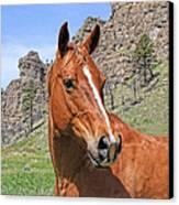 Quarter Horse Portrait Montana Canvas Print