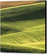 Quiet Morning In The Palouse  Canvas Print by Sandra Bronstein