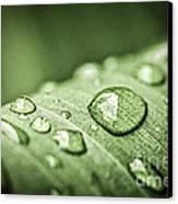 Rain Drops On Green Leaf Canvas Print by Elena Elisseeva