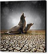 Rain Relief Canvas Print