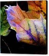 Rainbow Autumn Canvas Print