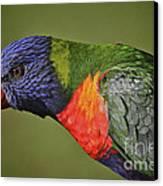 Rainbow Lorikeet 4 Canvas Print by Heng Tan