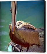 Rainbow Pelican Canvas Print