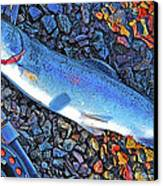 Rainbow Trout Dry Fly Reel Poster Image Canvas Print by A Gurmankin