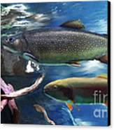 Rainbow Trout Canvas Print by Lisa Redfern