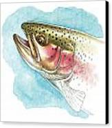 Rainbow Trout Study Canvas Print by JQ Licensing