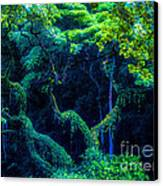 Rainforest In Waimea Valley Canvas Print by Lisa Cortez
