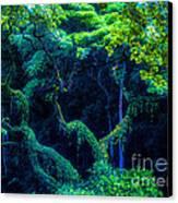 Rainforest In Waimea Valley Canvas Print