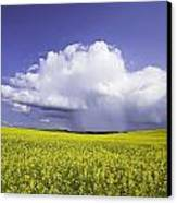 Rainstorm Over Canola Field Crop Canvas Print by Ken Gillespie