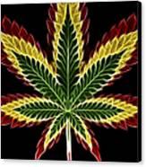 Rasta Marijuana Canvas Print by Adam Romanowicz
