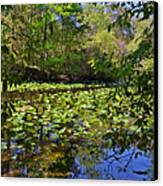 Ravine Gardens - A Different Look At Florida Canvas Print by Christine Till