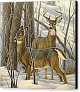 Ready - Whitetail Deer Canvas Print by Paul Krapf