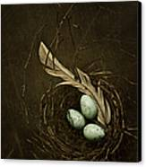 Rebirth Canvas Print by Amy Weiss