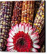 Red And White Mum With Indian Corn Canvas Print by Garry Gay