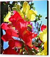 Red And Yellow Snapdragons I Canvas Print by Aya Murrells