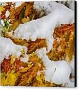 Red Autumn Maple Leaves With Fresh Fallen Snow Canvas Print