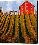 Red Barn In Autumn Vineyards Canvas Print