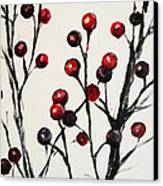Red Berry Study Canvas Print