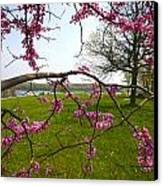 Red Bud Bloom Canvas Print by John Holloway