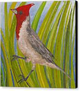 Red-crested Cardinal Canvas Print by Anna Skaradzinska