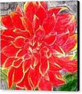 Red Dalia  Canvas Print