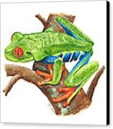 Red-eyed Treefrog Canvas Print by Cindy Hitchcock