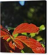 Red Fall Leaves Close Up Canvas Print