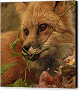 Red Fox In Autumn Leaves Stalking Prey Canvas Print