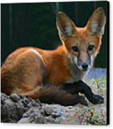 Red Fox Canvas Print by Kristin Elmquist