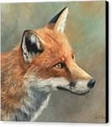 Red Fox Portrait Canvas Print by David Stribbling